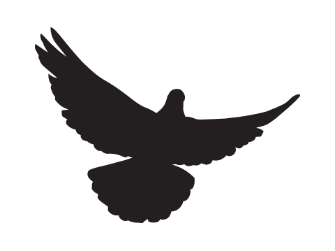 Paul Mortensen dove icon