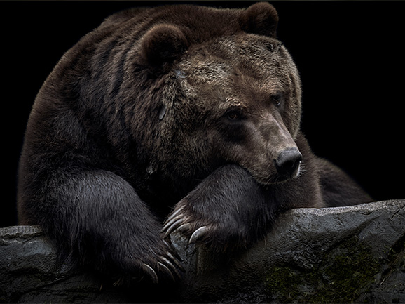 Bear With Us A Moment